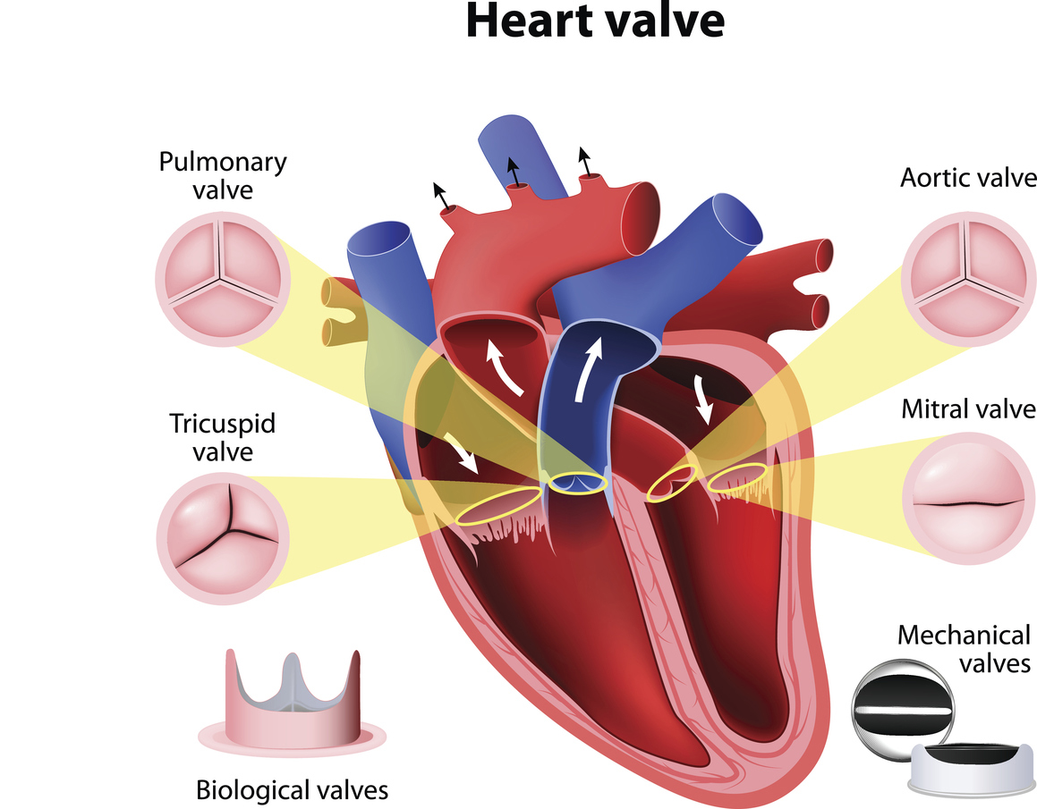 4.02 Mechanical and Plumbing Systems of the Heart