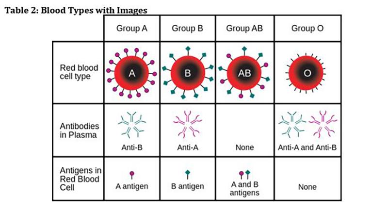 4.05 Blood Types