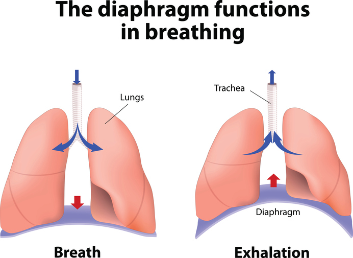 what are the major functions of the respiratory system