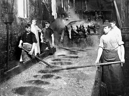 working conditions of the meat industry Safety and health guide for the meatpacking industry us department of labor ann mclaughlin these neighbor cuts are usually the direct result of over-crowded working conditions meat industry safety guidelines chicago.